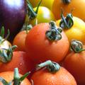 ナスと2種類のトマト。何とかサラダの足しになりそうなトマト達。 初収穫ではありませんが、トマトがまとまって採れました。オレンジ色のトマトは今年、初の...