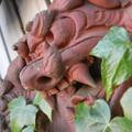 玄関回りの蔦、画面左は壁に張り付いた蔦を取った後の根の痕跡。  魔除けと言われる素焼きの「シーサー」まで蔦が到達しています。 蔦は四季を...