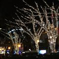 今年は白色(去年はよく覚えていませんが・・・)LEDですか?パリのシャンゼリゼ通りもクリスマスのイルミネーションは白色LEDになっているようですが、...