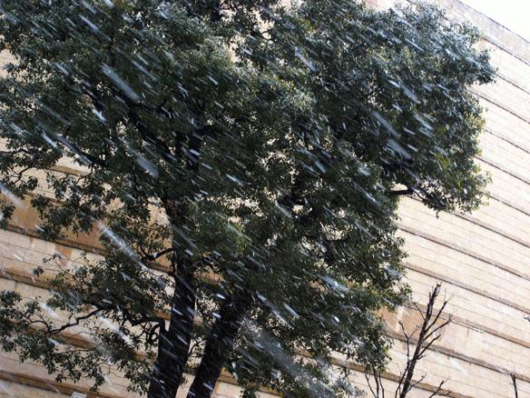 この雪の降り方は積もる可能性が大きいのだが、路面に積もるまでにはならなくて良かった。