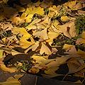 午前10時、外気温は7度の神宮外苑です。紅葉狩りも行けないままこの時期になりせめて外苑の銀杏並木でも眺め、我がW124の写真でも撮ってあげようと行っ...