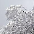 今年初滑りということで、有名な『樹氷』を、一度見てみたいと この前の連休をつかって山形県の蔵王に行ってきました。 目的地である蔵王温泉には、10時ご...